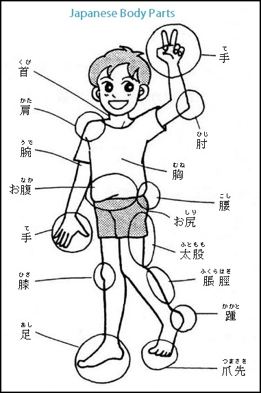Japanese Body Parts Words And Vocabulary