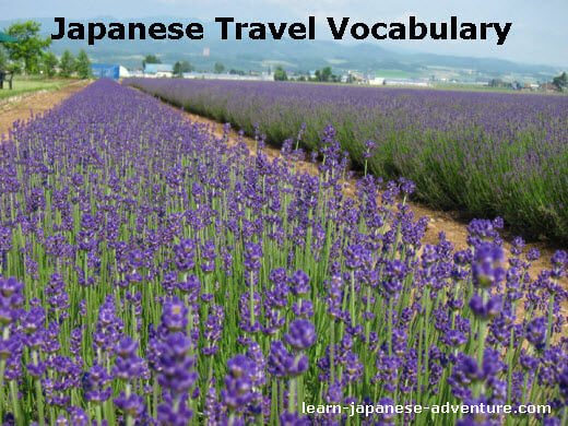 Japanese Travel Words: kankouchi - Hokkaido Lavender Farm