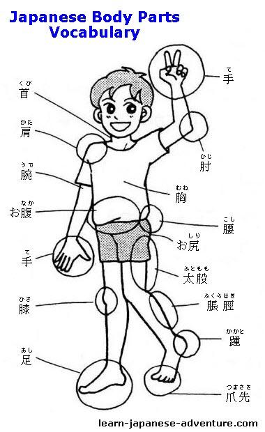 Japanese Body Parts Vocabulary